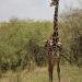 Masai Mara Safari Adventure!