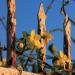 Greece Hotel Flowers